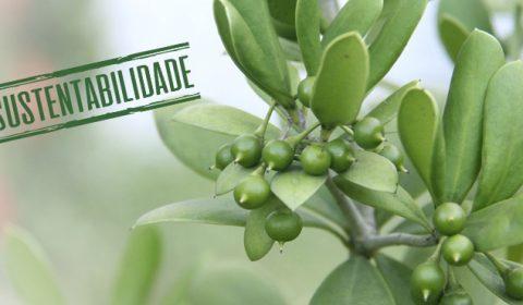 Fórum Clóvis Beviláqua incentiva plantio de espécies nativas em parceria com Movimento Pró-Árvore