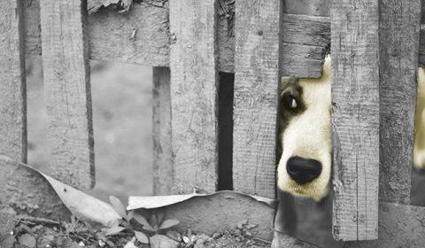 Justiça mantém sentença que determina construção de abrigo para animais em Barbalha